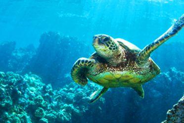 巴厘岛- 南湾&海龟岛Turtle Island 一日游