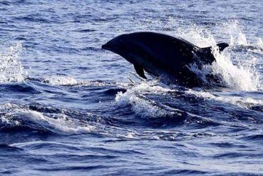 巴厘岛 - 海豚之约4日游